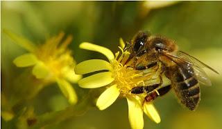Abeja sobre una flor amarilla