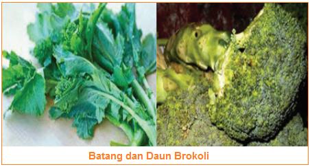 Kandungan dan Manfaat Batang dan Daun Brokoli