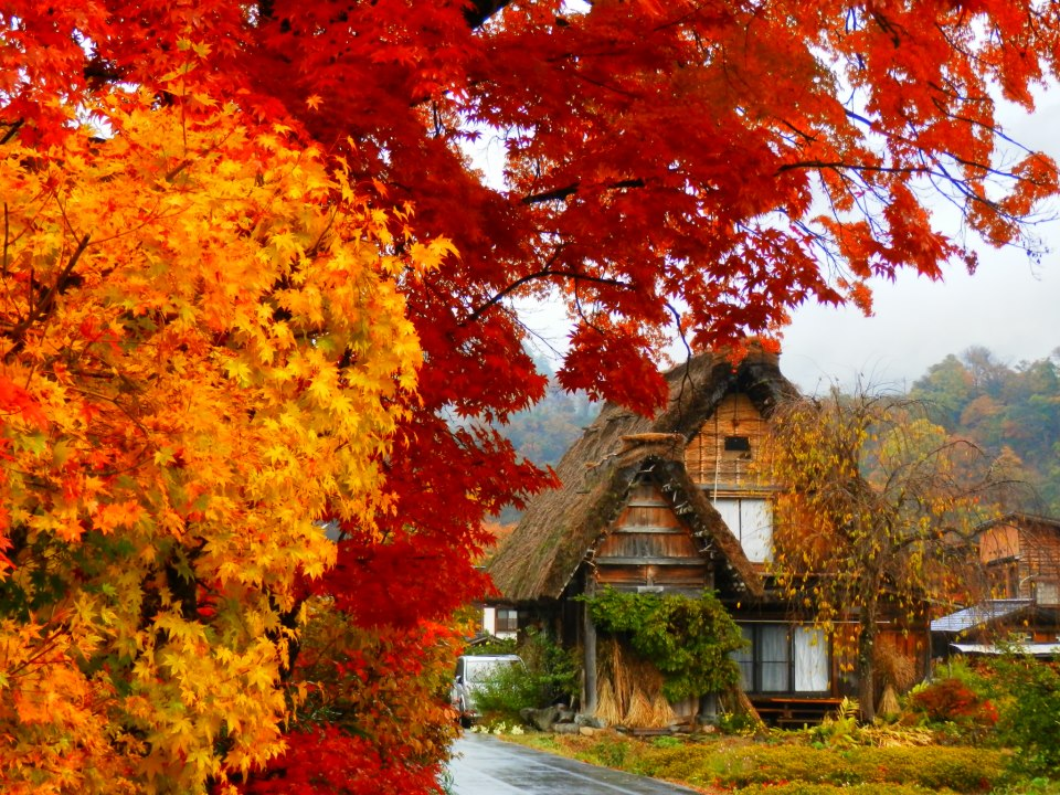 Eastcoastlife Colours Of Fall In Japan Photohunt