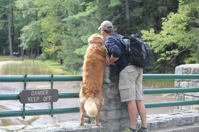 golden retriever and owner disobey sign on bridge