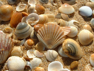 living near the sea i am lucky enough to be able to collect sea shells