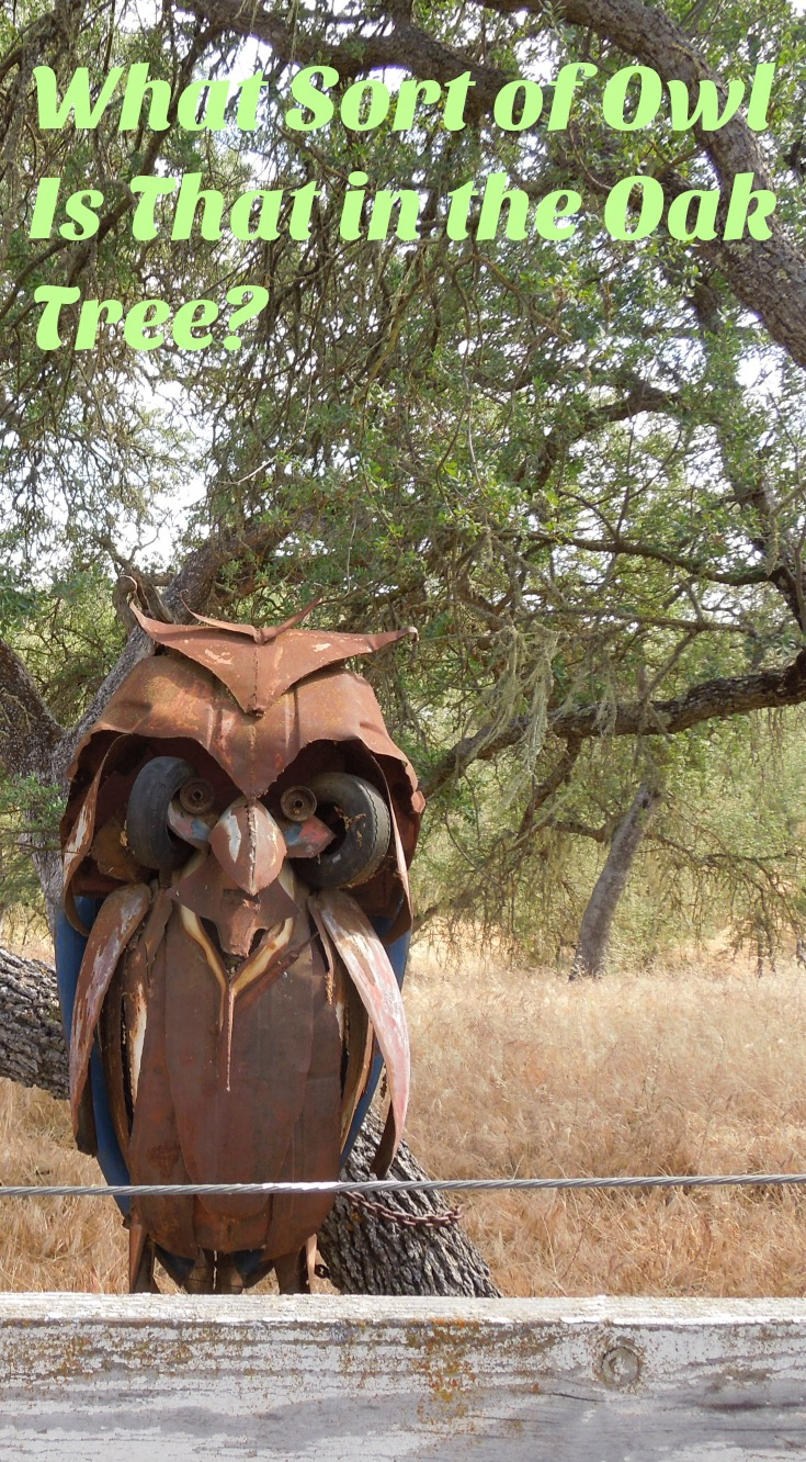 What Sort of Owl Is That in the Oak Tree? Wouldn't you like an owl sculpture in your yard?