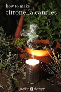 Make DIY Citronella Candles