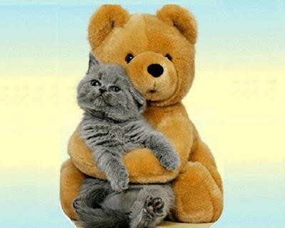 Dongeng Anak Anak Kesalah Pahaman Beruang Dan Kucing Moco Cerpen