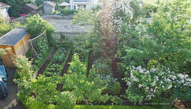 Sommer im Gemüsegarten