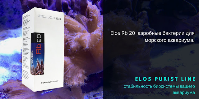 Elos Rb20