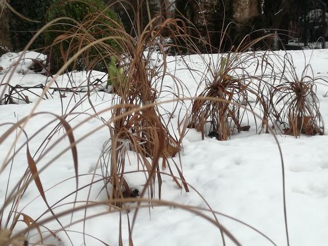 trawy zimą