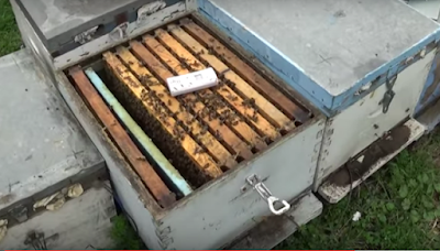 Αλέξανδρος Σαββίδης: Έφερα την Πελοπόννησο στην Θράκη... με σύστημα υποστήριξης μελισσιών τον χειμώνα VIDEO