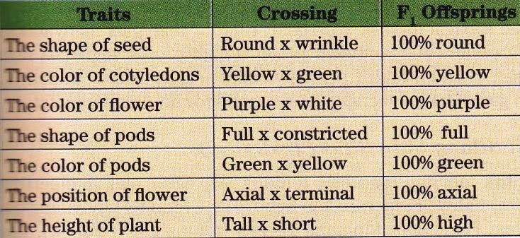 Monohybrid Cross and Segregation Law ~ New Science Biology