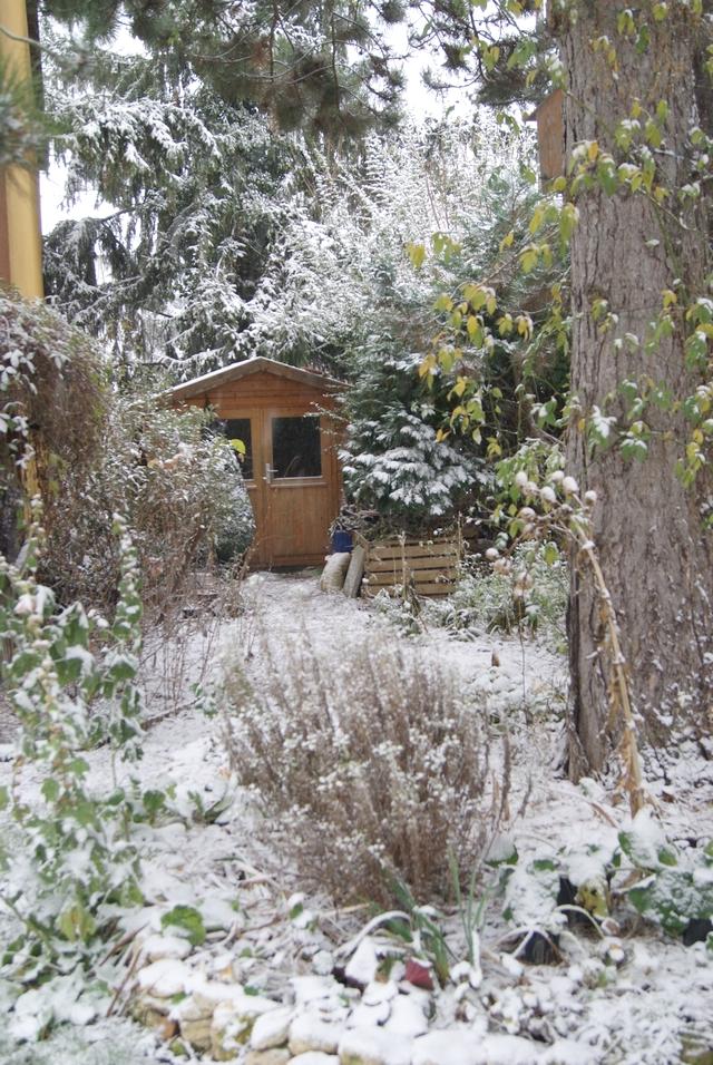 Gartenhütte und Beet unter der Kiefer im Schnee