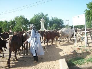 Going to Maiduguri…