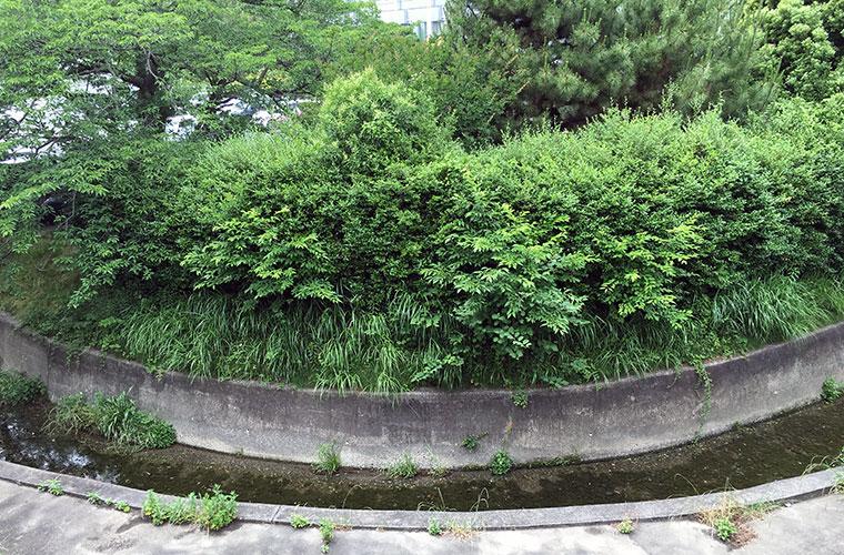 浜松医療センターと浜松市立看護専門学校の間を佐鳴湖へ流れる川の向こうに見える湾曲した部分に「太刀洗の池」があったとされるが池は今は見られない(2016年5月29日撮影)