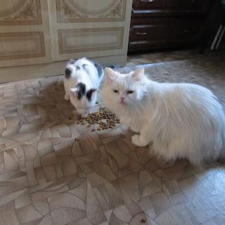 Яна и Лёша