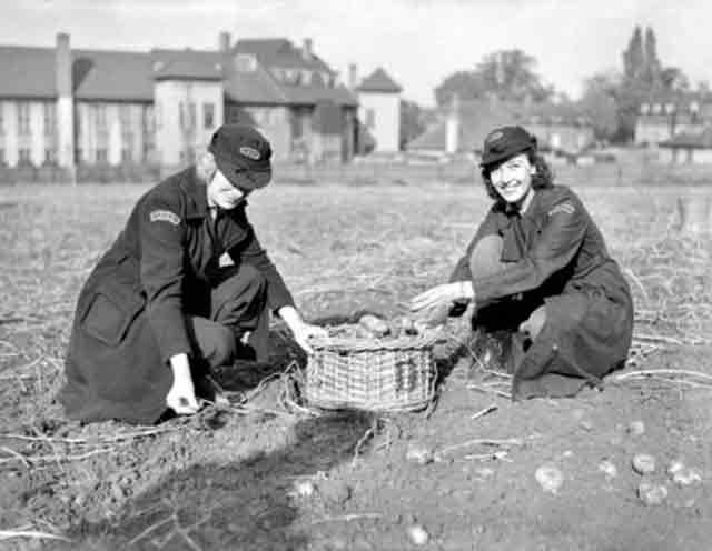 Digging potatoes for the war effort, 23 October 1941 worldwartwo.filminspector.com