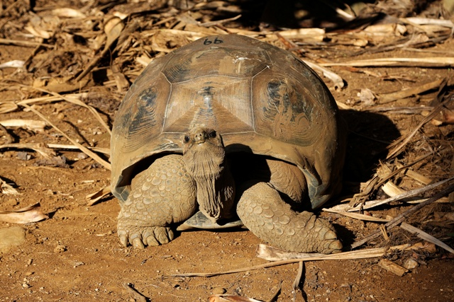 La Vanille Nature Park y su tortuga gigante Aldabra