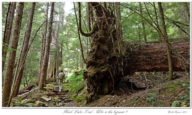 Mink Lake Trail: Who is the bypasser?