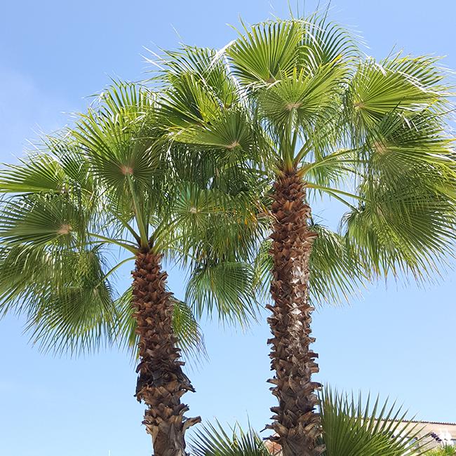 Spain, Spanien, Espana, Palms, Palmen