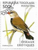 Selo Diamante Sparrow