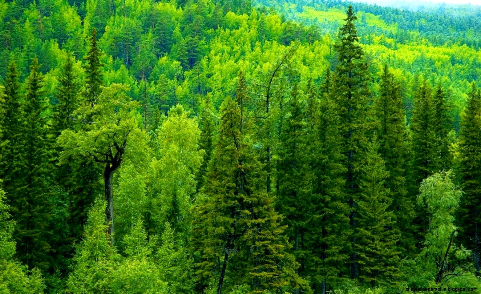 Forest Trees Wallpapers