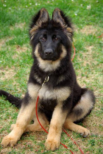 موقف مبكي| كلب جائع يجد جنين على الأرض القته امه التي باعت انسانيتها لن تصدق رد فعل الكلب !!!