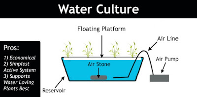Hydroponics Water Culture System (Water Culture)