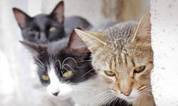 Σκοτώνει γάτες και δίνει συνταγές για φόλες στο Facebook (φωτο)