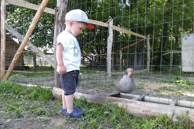 Mini zoo Sereczyn