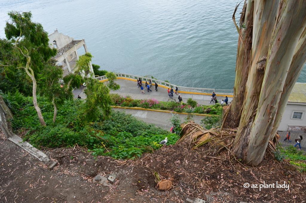 Alcatraz Island Tour Amp