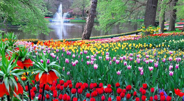 Parque Keukenhof em Amsterdã em Maio