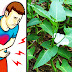 Kangkong must be washed and cooked well before eating. Here are the reasons why