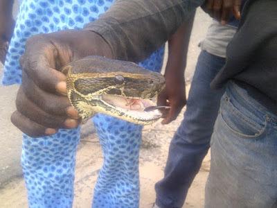 python killed lekki epe lagos