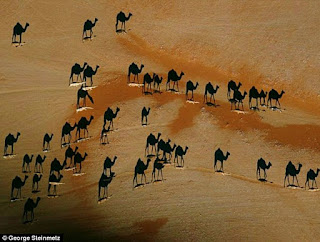 http://www.dailymail.co.uk/femail/article-4081380/Can-s-really-going-Confusing-camel-optical-illusion-leaves-internet-baffled.html