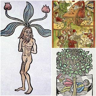 Mandrake, Harry Potter, Professor Sprout,