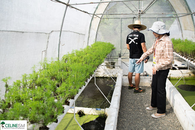 aquaponics farm in the philippines