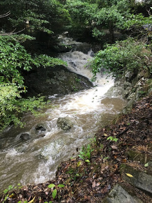 菅生の滝への道に並走する沢