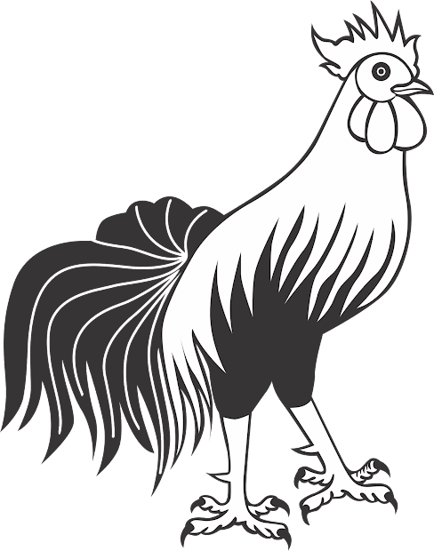 contoh gambar bagaimana cara mewarnai ayam jago