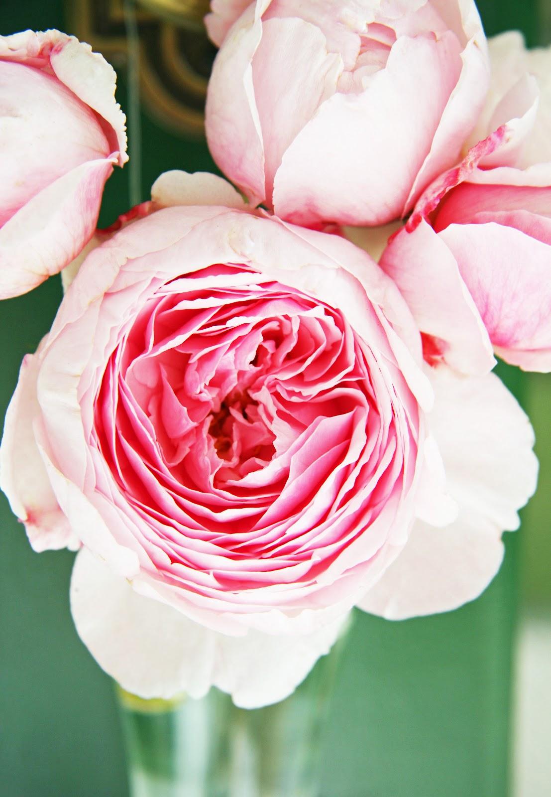 English_rose