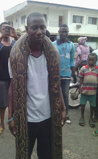 , This Man Loves Killing Snake, See Photos, Latest Nigeria News, Daily Devotionals & Celebrity Gossips - Chidispalace
