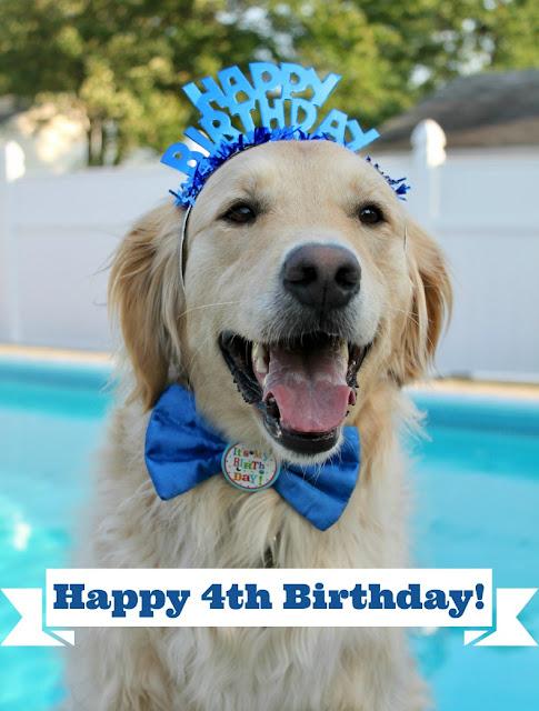 golden retriever dog's birthday on total solar eclipse