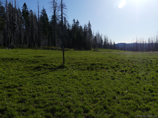 large meadow area