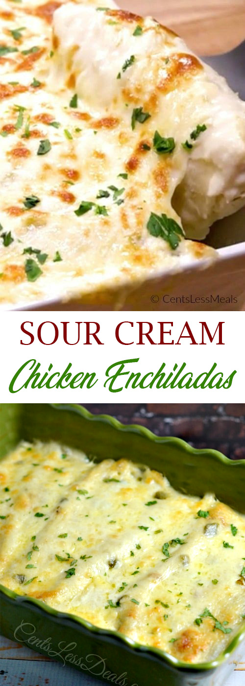Best Sour Cream Chicken Enchiladas Recipe