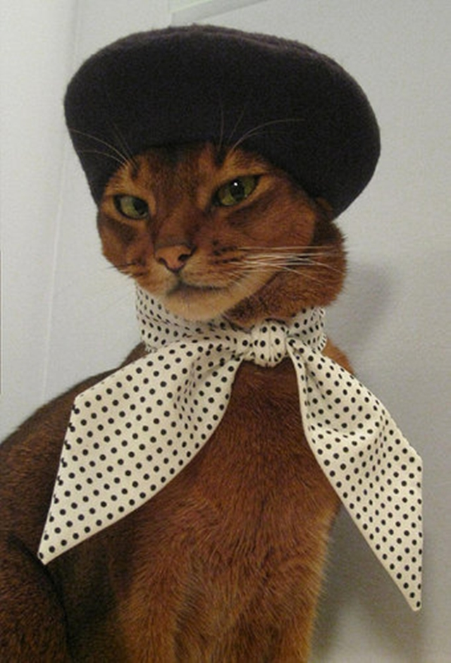 Best dressed cats of 2013   funny bits