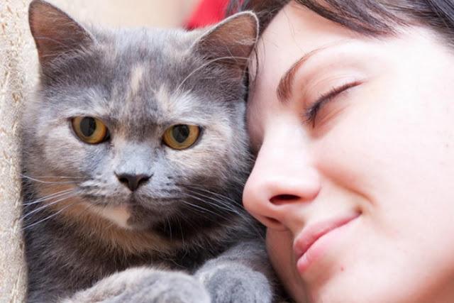 Cat Allergy Medicine