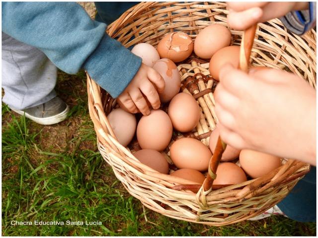 Niños recolectando huevos de gallina en una canasta - Chacra Educativa Santa Lucía