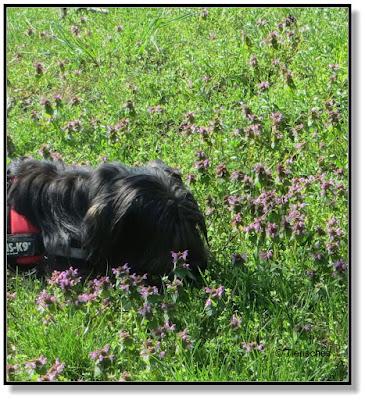 Frühling mit Hund