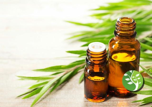 Puede el aceite de árbol de té tratar el eccema