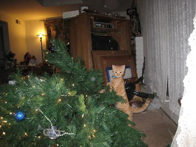 Cat knocked down Christmas tree