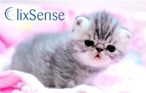 http://www.clixsense.com/?10681744