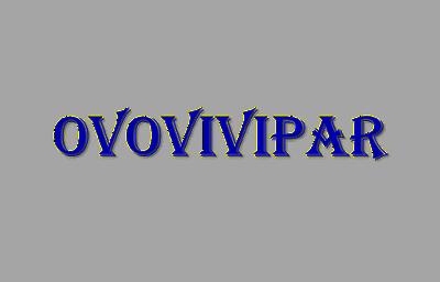 Hewan Ovovivipar Adalah Hewan Yang Berkembang Biak Dengan Cara Bertelur Dan Beranak. Penjelasannya...