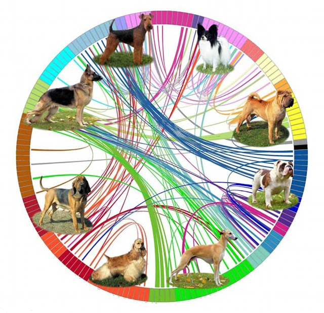 The evolution of dog breeds mapped